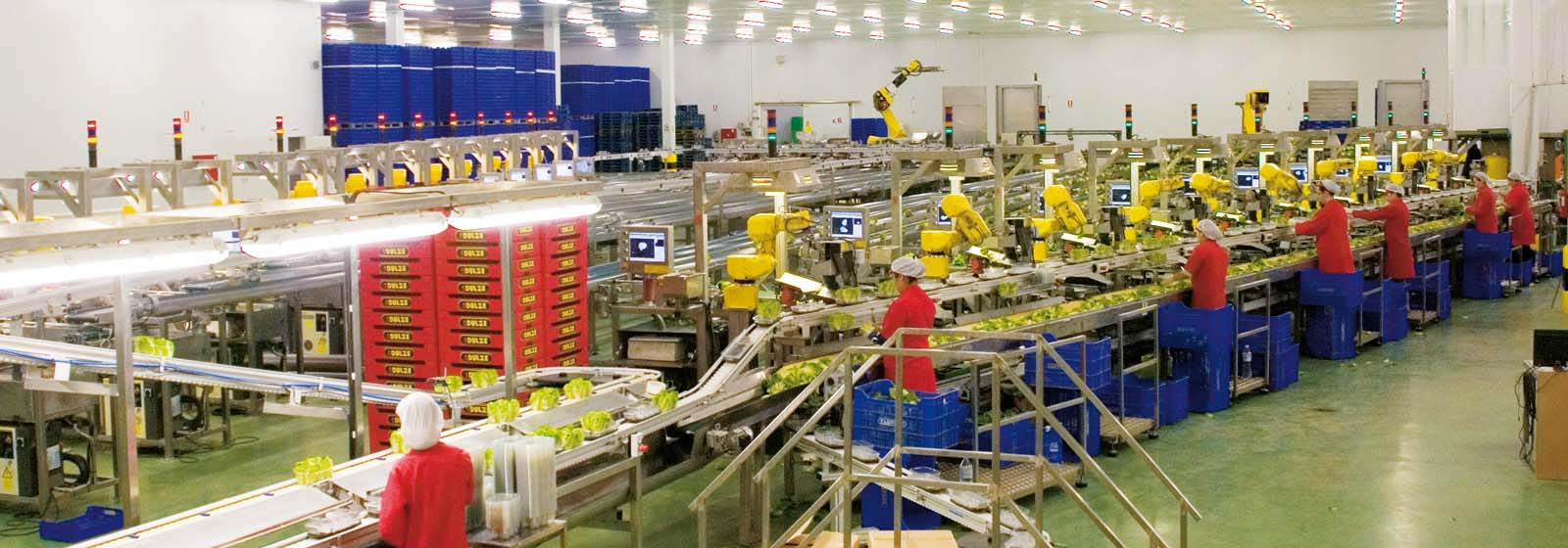 Automated food production line